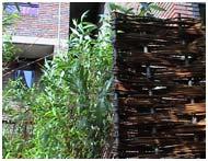 School garden willow screen Plunket Gardens