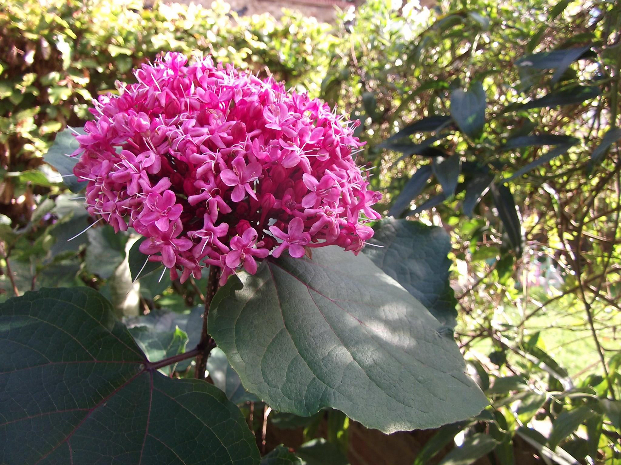 August plant colour