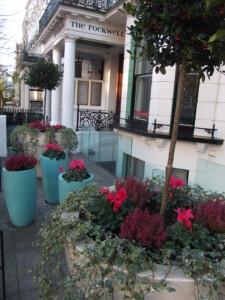 Plunket hotel planting 5