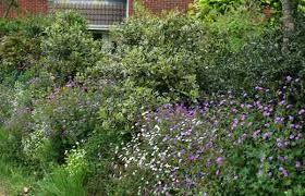 sustainable garden designer