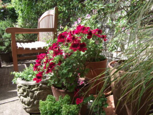 My garden in August colourful containers overview