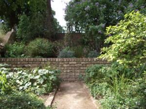 My garden in summer rear view