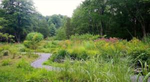 New natural garden in summer