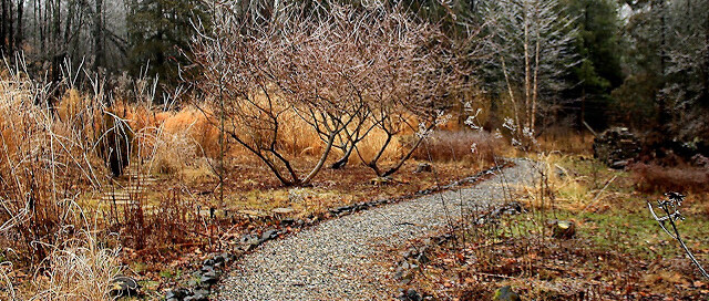 New natural garden in winter with path