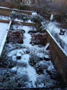 structural planting in terraced garden