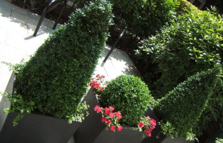 Brook Green garden designer