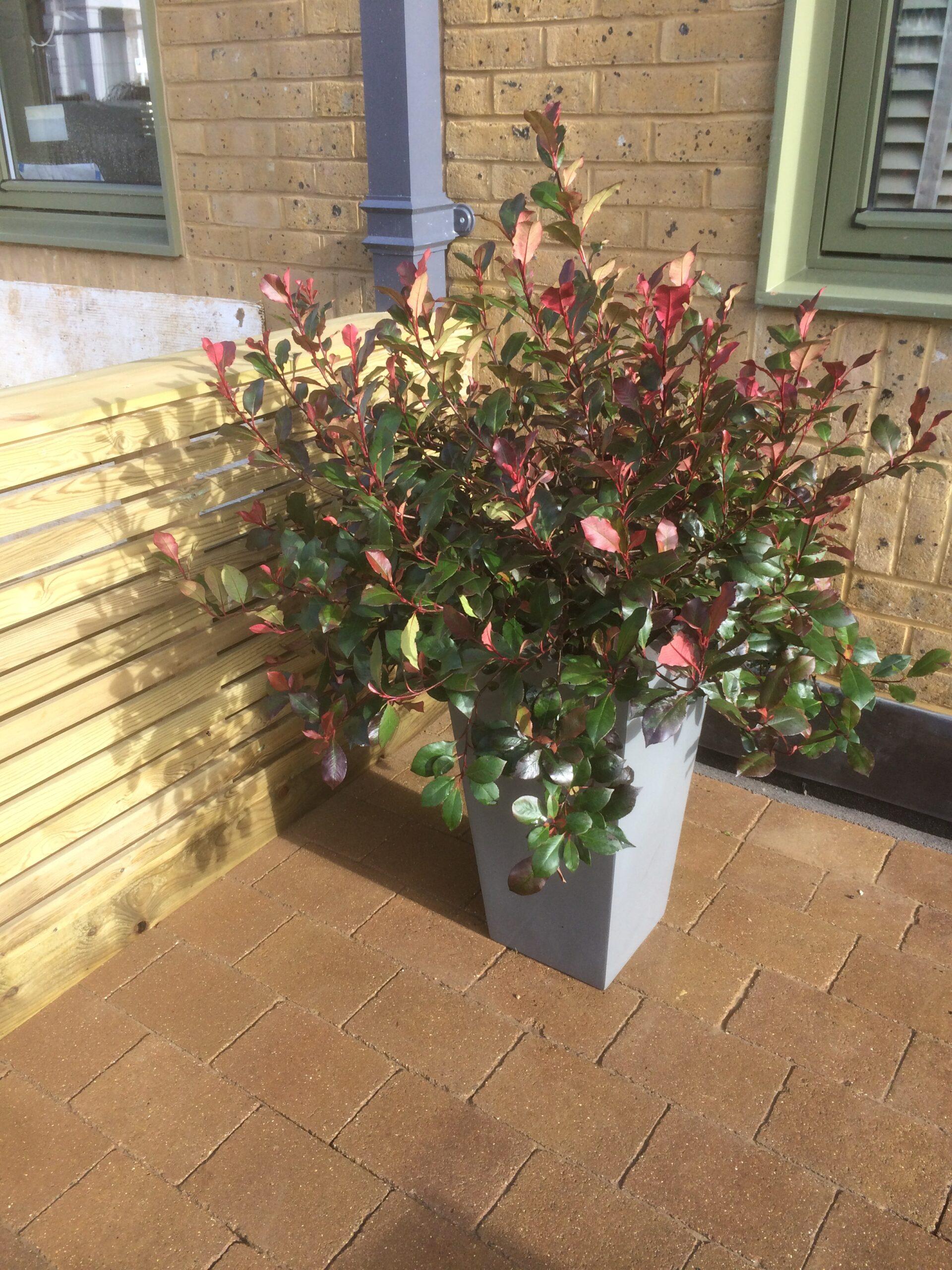 show house garden landscaping