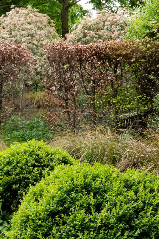 Hammersmith walled garden Box hedge port